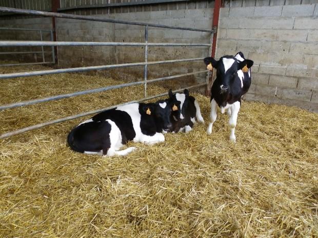 Visiter la ferme tous les soirs de semaine à partir de 17h
