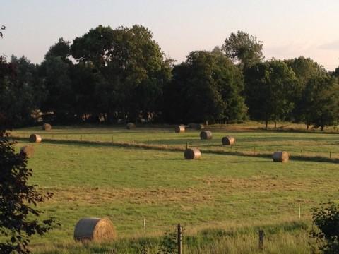Le fourrage pour l'alimentation des vaches