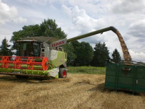 La culture du blé et la moisson