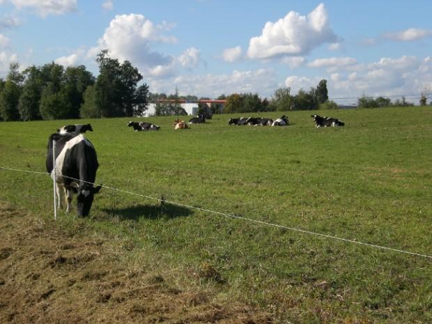Saint-Thibault-des-Vignes, un territoire d'exception