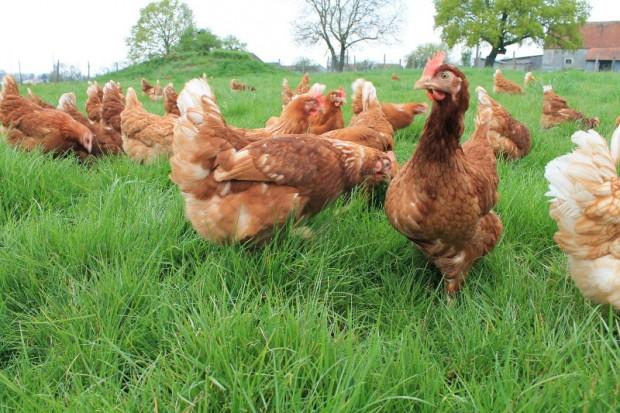 Interview : La ferme des Parrichets, producteur d'œuf en Seine et Marne