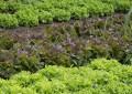 Quelques conseils pour protéger votre jardin !