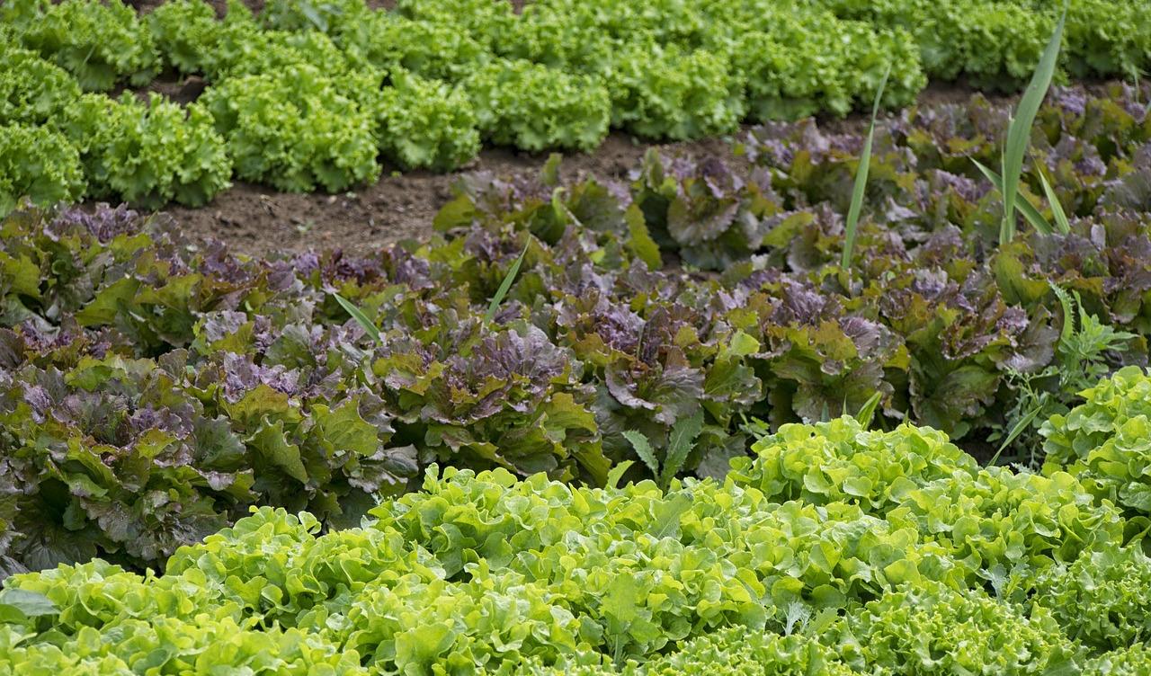 Quelques conseils pour prot ger votre jardin la ferme for Conseil pour le jardin