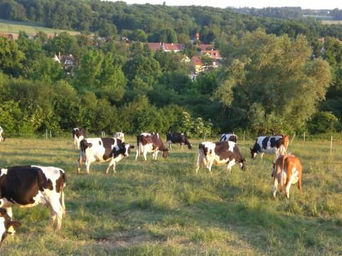Juillet 2016 : Les nouveautés à la ferme