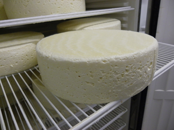 Le caillage du lait : étape de base de la création d'un fromage !