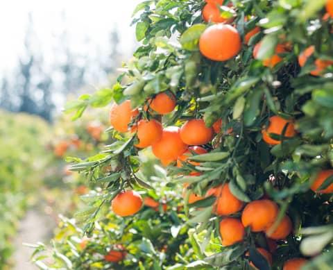 Informations du moment et confiture d'oranges