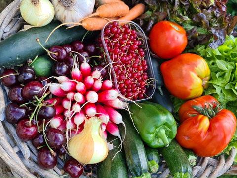Arrivée de légumes et recette de tian aux légumes